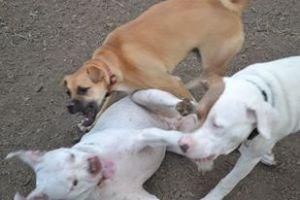 Crazy Dogs!