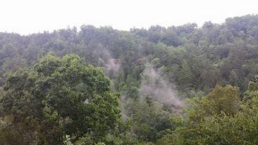 gorge fog